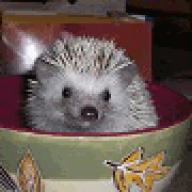 Tumor hedgehog mouth Hedgehog Ailments